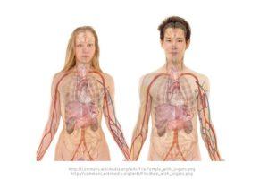 anzeichen symptome leberkrebs 300x201 - Leberkrebs: Was sind die Ursachen und Symptome?