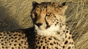 Die schnellsten Tiere der Welt erleben