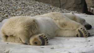 Winterschlaf und Winterruhe erkennen