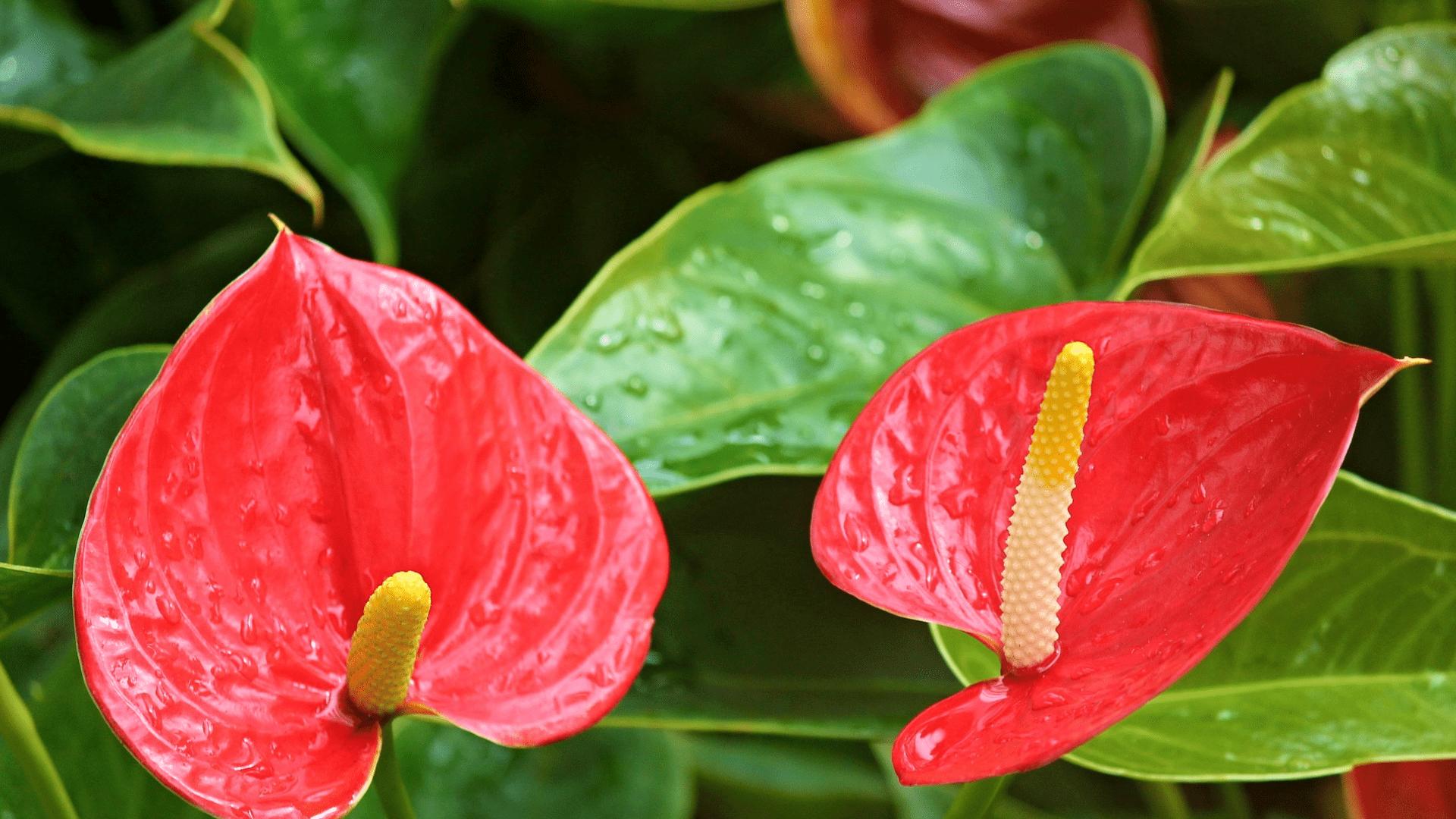 Bekannte luftreinigende Pflanzen im Überblick