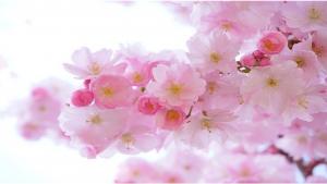 Wie pflegt man seine Blumen im Frühjahr?