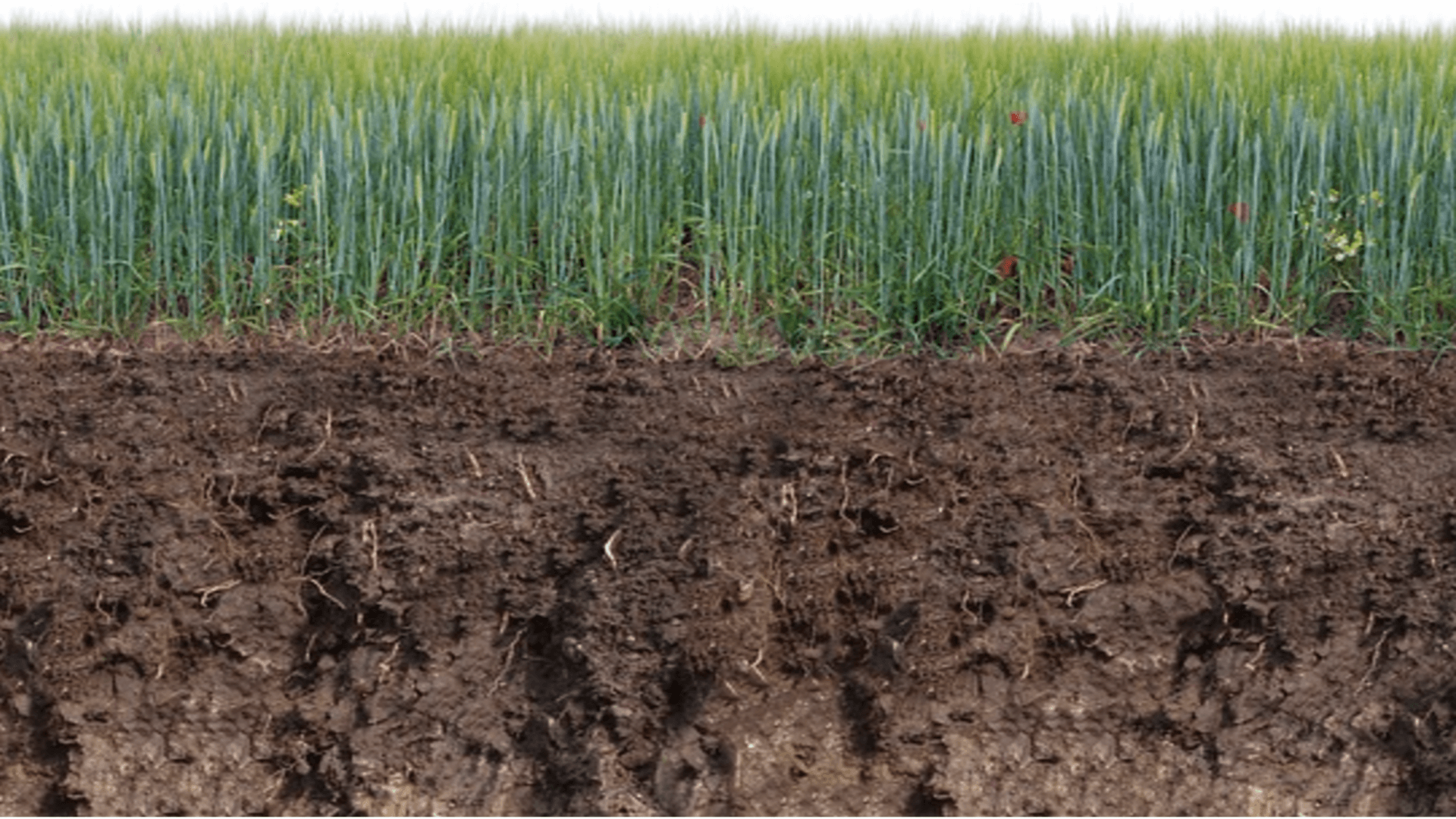 Was ist ein Mutterboden? Definition