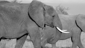 Welches Landlebewesen war das größte Tier der Welt?