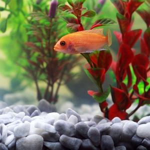 Süßwasseraquarium Welche Pflanzen sind einfach zu halten