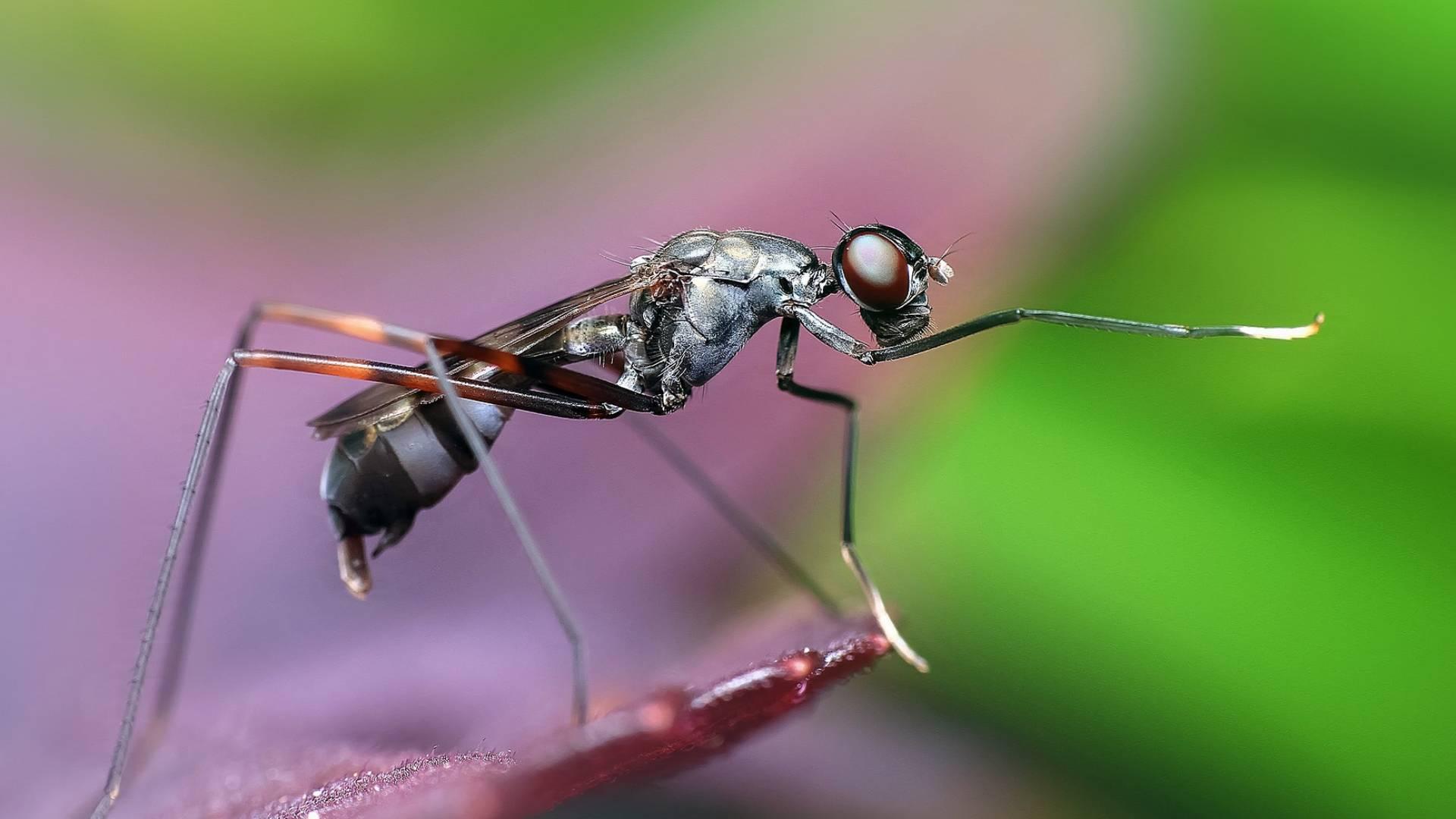 Besondere Ameisen - Sie können ihr Gehirn verändern!