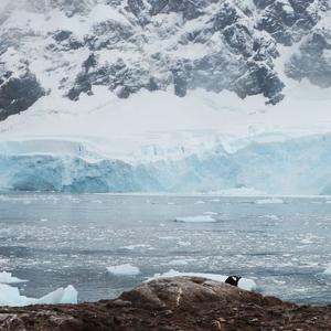 beunruhigende entdeckung thwaites gletscher 300x300 - Beunruhigende Entdeckung unter Thwaites-Gletscher
