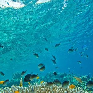 Der Ipnops meadi Fisch hat statt Augen Sonnenkollektoren