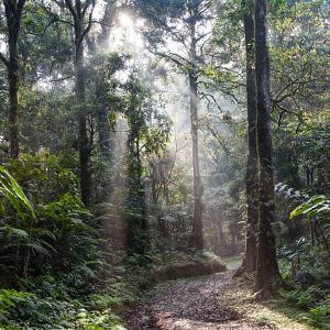 Brasiliens Amazonas-Regenwald emittiert immer mehr CO2