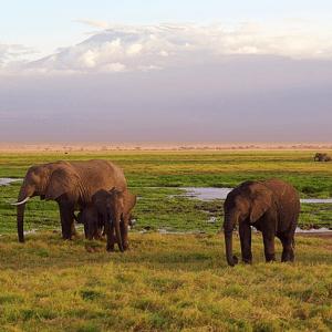 In Botswana sterben Elefanten ohne erkennbaren Grund
