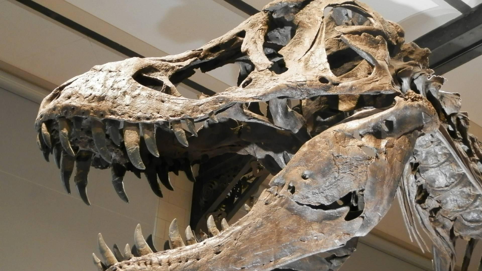 Dieser Dinosaurier war sehr gesprächig!