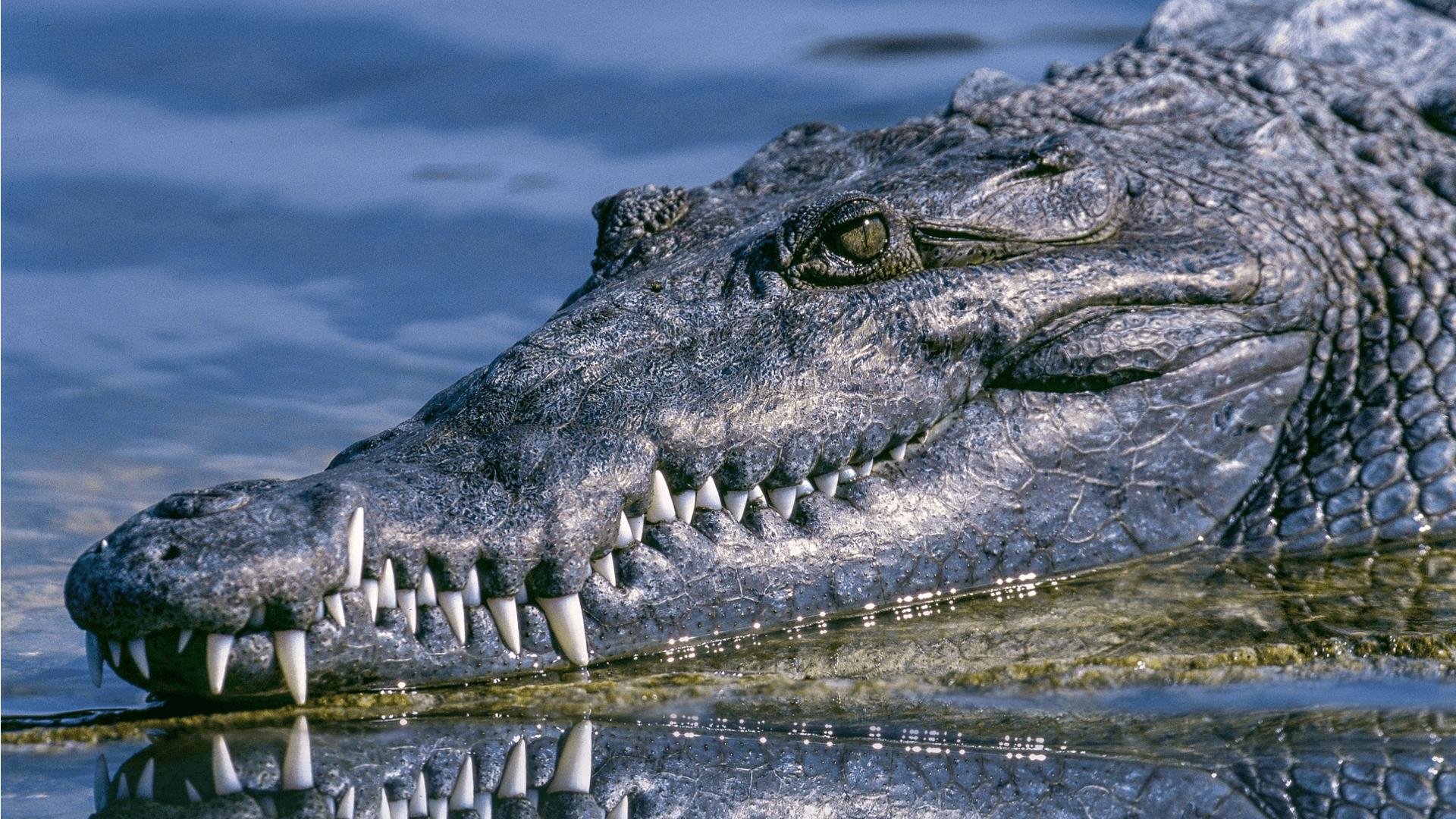 Das Tier mit den meisten Zähnen