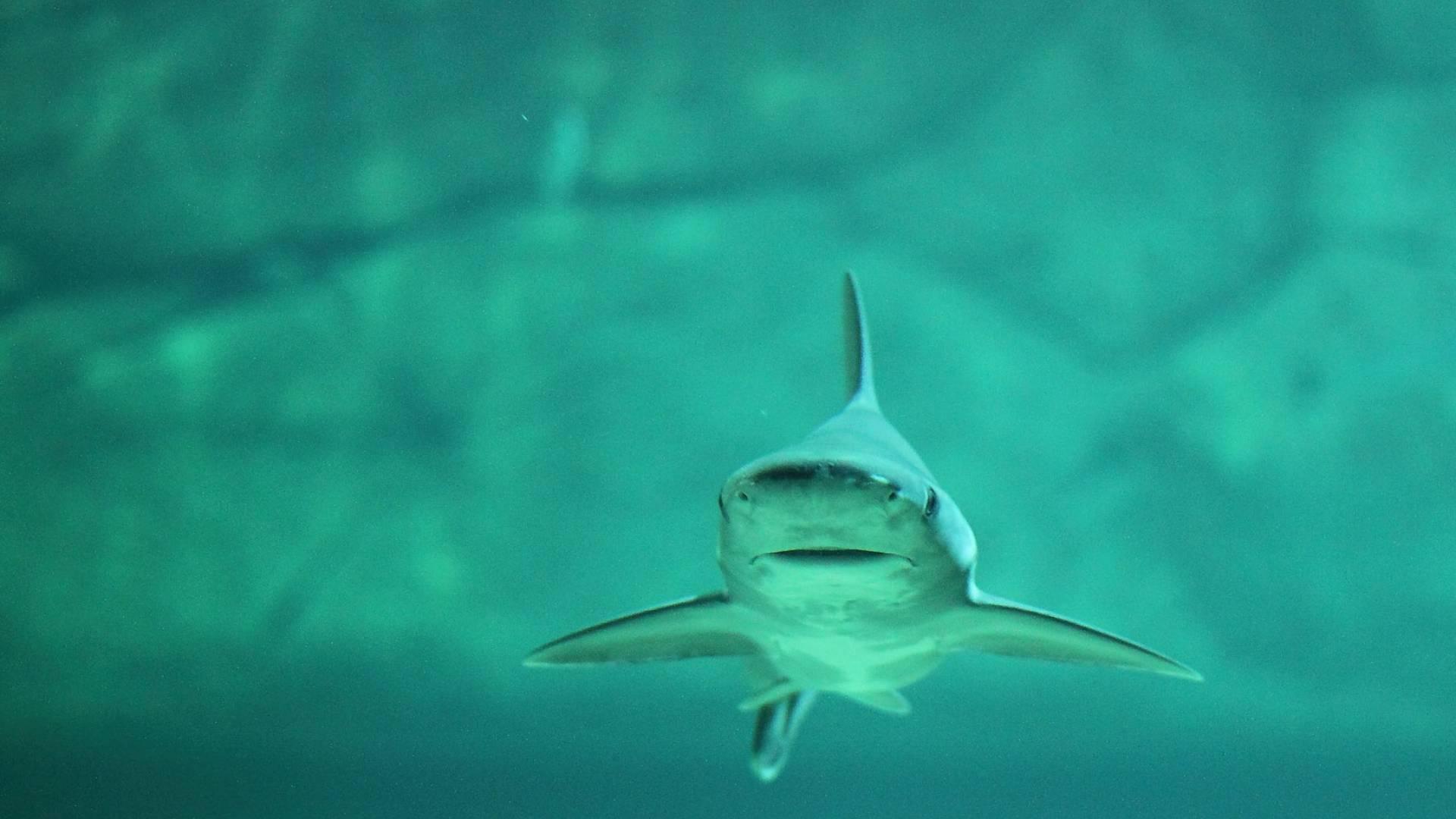 Haie Surfen um Energie zu Sparen