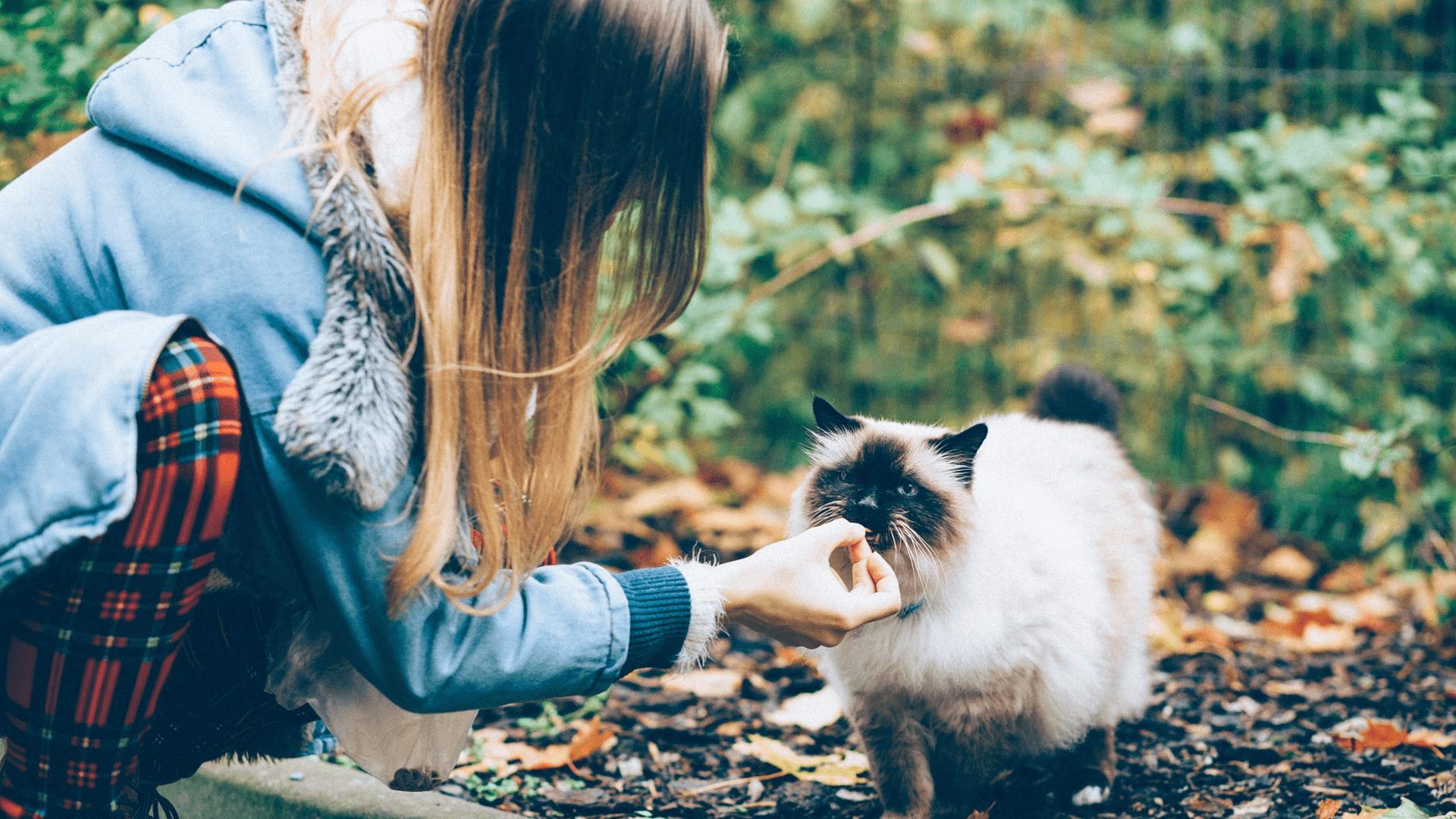 Nicht immer lieben Katzen die Distanz