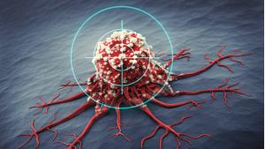 Welche Rolle spielt das Protein p53