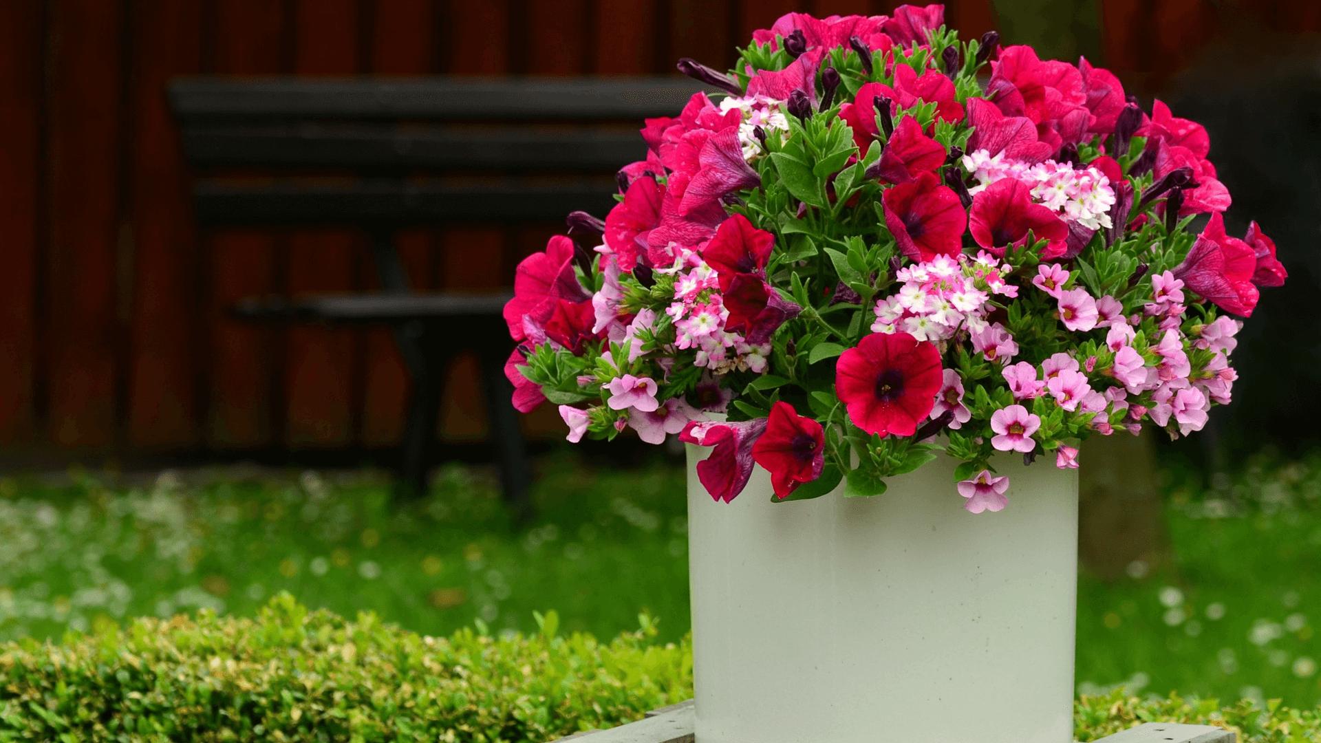 Terraplanter die Innovation für nachhaltige Blumentöpfe