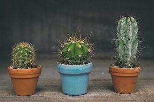 welche pflanzen konnen angebaut werden 300x200 - Terraplanter: die Innovation für nachhaltige Blumentöpfe