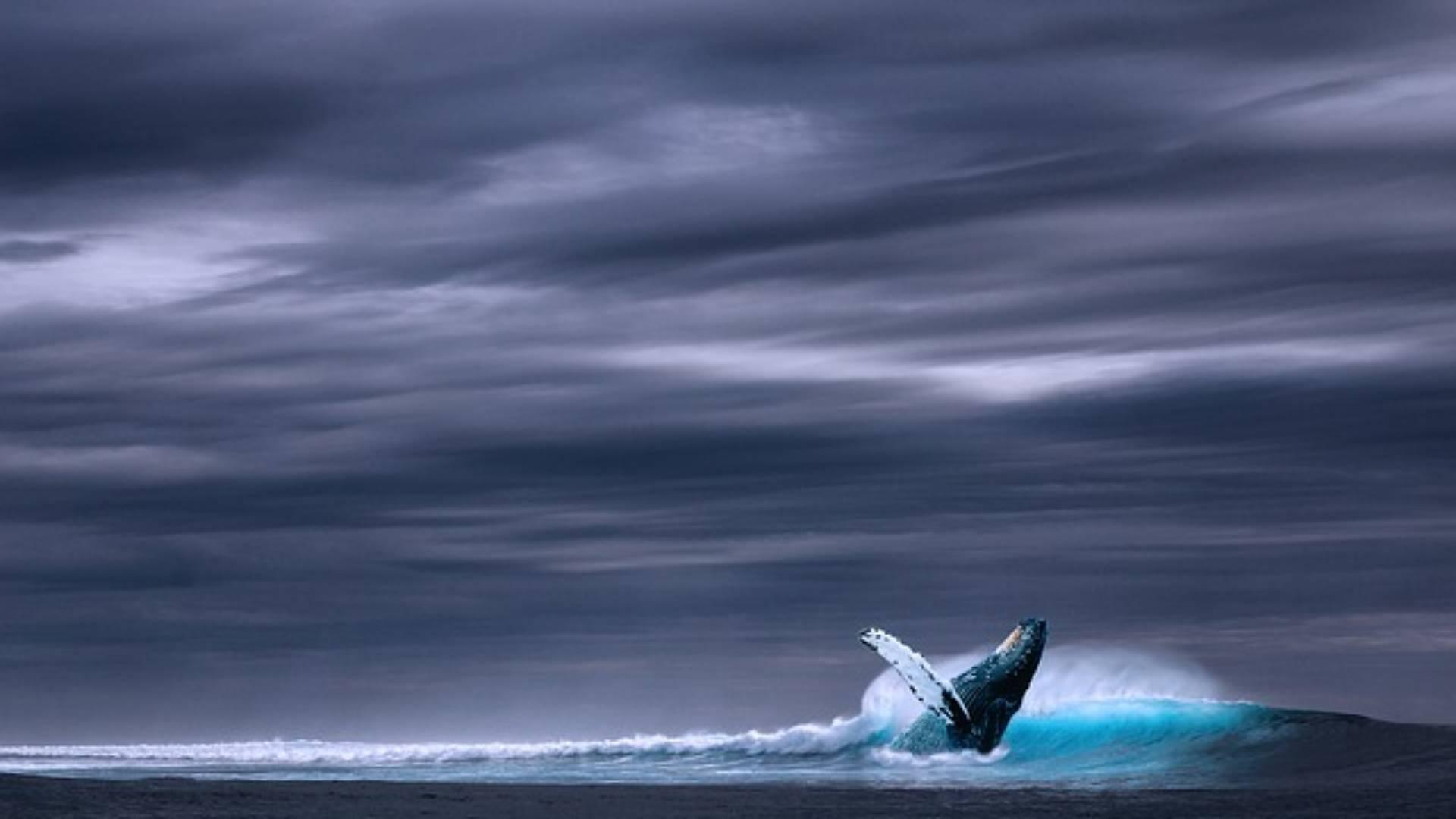 TIERE - Ist der Blauwal in seiner Länge wirklich unübertroffen?