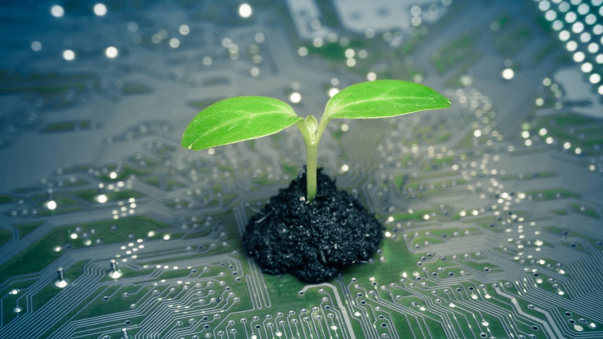 Green IT - Umweltschutz in der Welt der IT