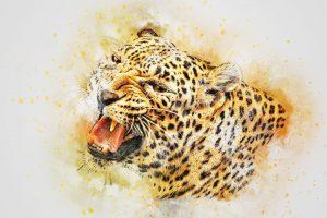Leoparden - Wie leben sie?