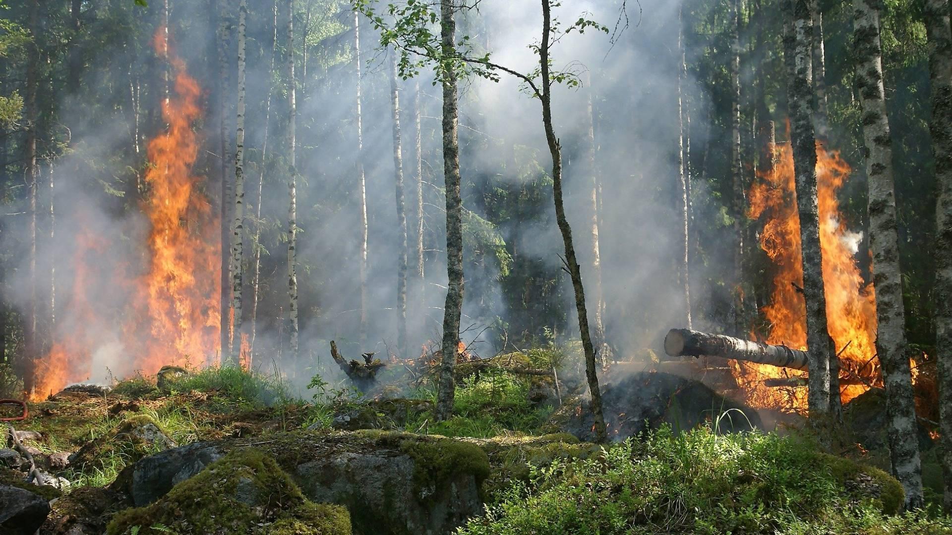 Die weltweiten Waldbrände werden zehn Jahre dauern