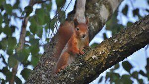 interessiert us armee eichhornchen 300x169 - Warum interessiert sich die US-Armee für Eichhörnchen?