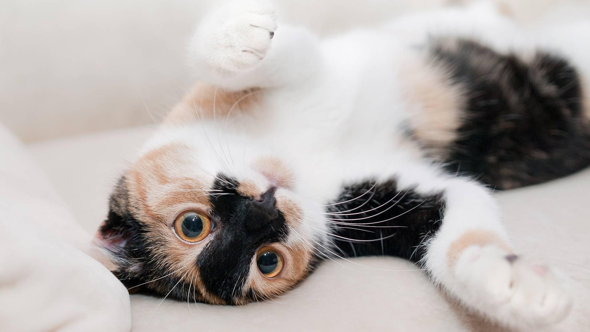 Warum sind Katzen gestreift?