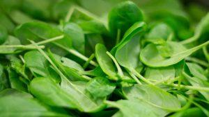 spinat anti krebs eigenschaften 300x169 - Spinat reduziert das Risiko für Darmkrebs