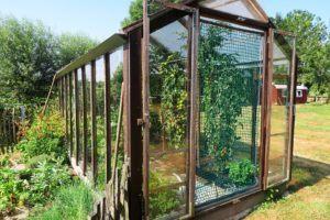 Par quoi on peut remplacer la serre de jardin ?
