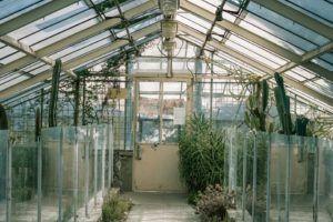 Quels sont les inconvénients de serre de jardin ?