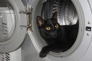 Où acheter sa machine à laver silencieuse ?