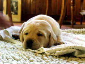 Comment fonctionne un tapis?